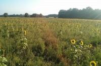 Auscultation par microgravimétrie du futur parc éolien de Dénézé-sous-Doué (49)